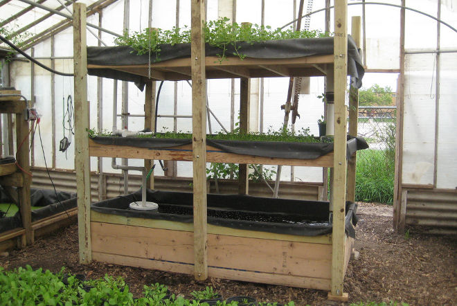 Aquaponic system growing power credit charlie vinz