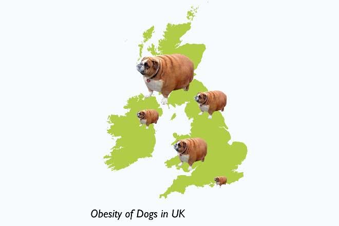 Obesity of dogs in uk 660x440